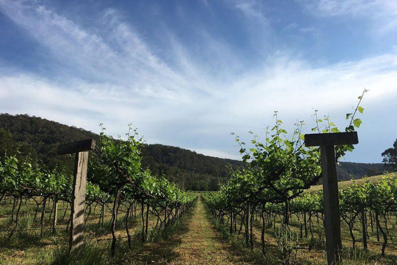 Stonehurst Cedar Creek, Hunter Valley Vineyard