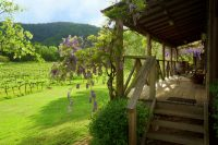 Cedar Creek Cottages, Wollombi Accommodation with vineyard views